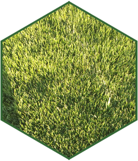 service_icon_turf_light